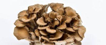 Les bienfaits des champignons médicinaux pour la santé